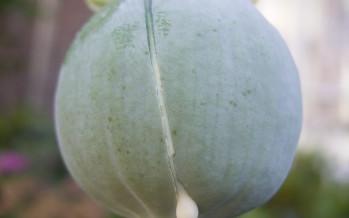 Opium Unsinn